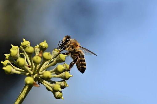 Bee, Insect, Entomology, Macro, Nature, Animal