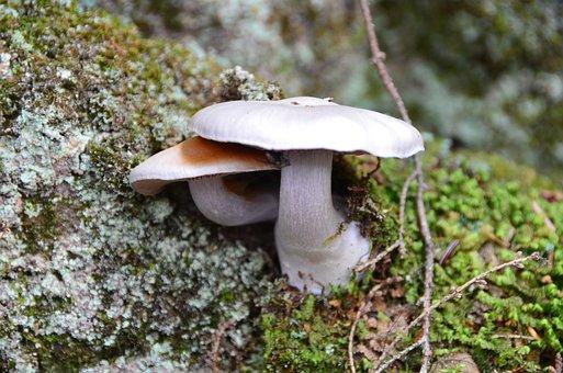 Mushrooms, Toadstools, Fungi, Moss, Lichens, Nature