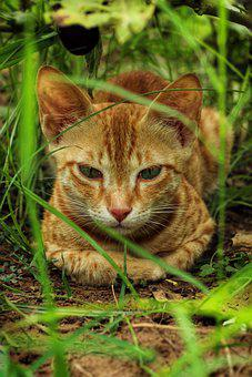 Cats, Feline, Kitty, Orange Cat, Pet, Animal, Outdoors