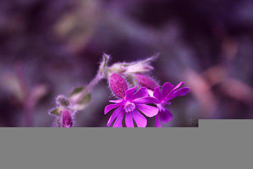 Flowers, Purple Flowers, Plant, Bloom, Blossom