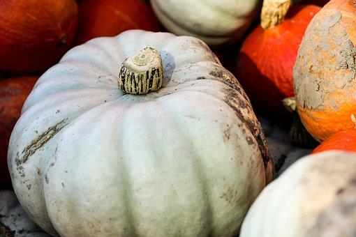 Pumpkin, Squash, Vegetables, Produce, Harvest, Organic