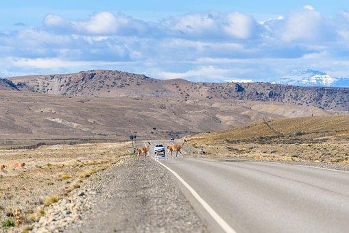 Landscape, Road, Guanacos, Highway, Road Crossing