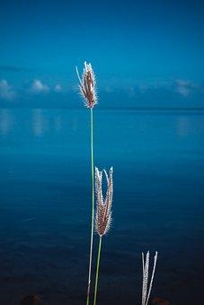 Spikes, Plants, Seeds, Stem, Horizon, Sea, Sky
