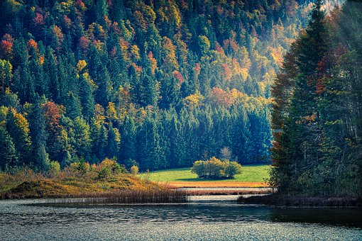 Lake, Forest, Nature, River, Water, Sunlight, Sunrays