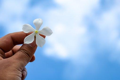 Flower, Hand, Hand Holding A Flower, White Flower