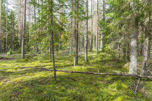 Trees, Forest, Nature, Foliage, Woods, Woodland, Plants