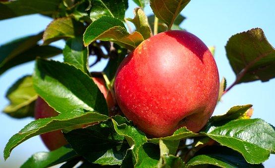Apple, Red Apple, Fruit, Ripe, Food, Vitamins