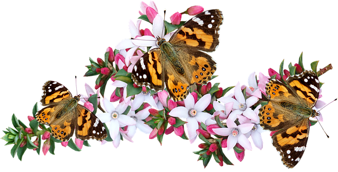 Butterflies, Insects, Flowers, Pollination, Bloom