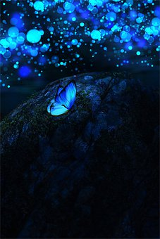 Butterfly, Dark, Nature, Insect, Bokeh, Lights, Night