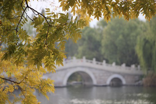 Tree, Leaves, Bridge, Stone Bridge, Foliage