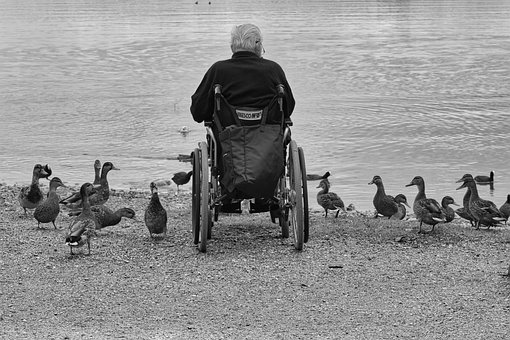 Man, Wheelchair, Ducks, Lake, Water, Feed, Person