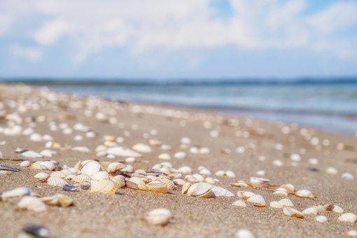 Sand, Seashore, Shells, Seashells, Mussels, Shore