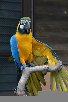 Parakeet, Bird, Wings, Feathers, Pluamge, Branch