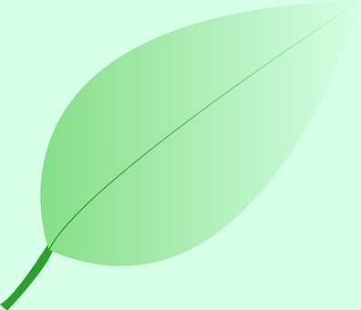 Leaf, Plant, Nature, Green, Flora