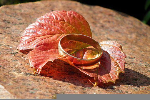 Wedding Ring, Gold Ring, Ring, Jewelry, Accessory, Leaf