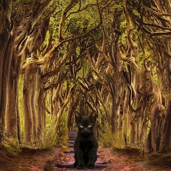 Cat, Kitten, Woods, Path, Forest, Fantasy, Sweet, Pet