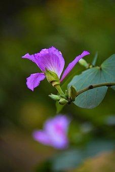 Flower, Petals, Leaves, Foliage, Floral, Flora, Botany