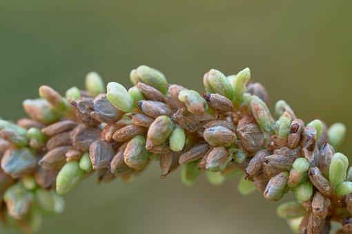 Flower, Seeds, Nature, Plant, Flora