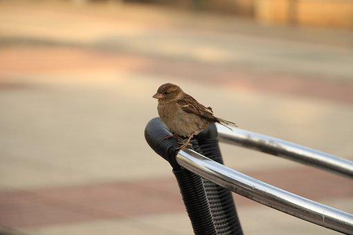 Bird, Sparrow, Beak, Feathers, Plumage, Avian, Animal