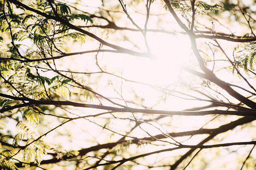 Tree, Branches, Leaves, Sunlight, Sunny