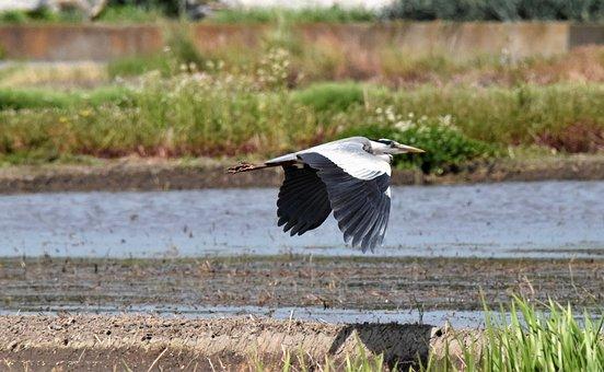 Bird, Feathers, Plumage, Beak, Wings, Field, Wild Bird