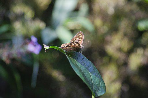 Butterfly, Insect, Leaf, Plant, Flora, Nature, Closeup
