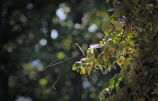 Tree Pipit, Bird, Perched, Songbird, Flying, Tree
