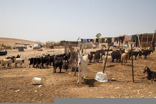 Goats, Donkeys, Farm, Nomadic Lifestyle, Village