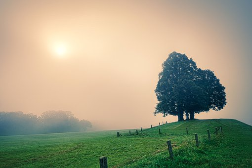 Landscape, Tree, Meadow, Pasture, Grass