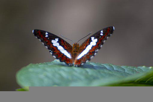 Butterfly, Insect, Bug, Wings, Pattern