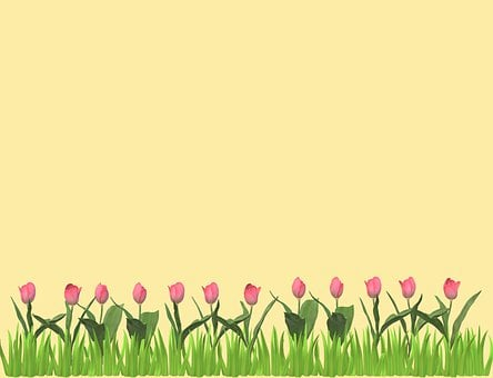 Background, Tulips, Flowers, Floral, Spring, Meadow