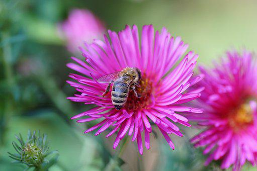 Flower, Bee, Pollen, Pollinate, Pollination, Bloom