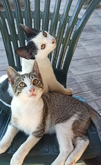 Cats, Kittens, Feline, Pets, Sitting, Resting, Look Up