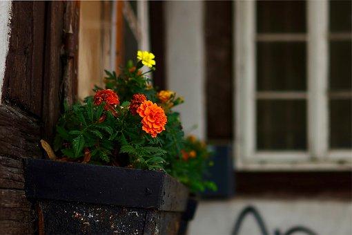 Window Box, Plant Box, Flowers, Bloom, Blossom