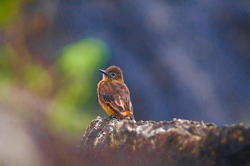 Bird, Beak, Feathers, Plumage, Avian, Nature, Animal