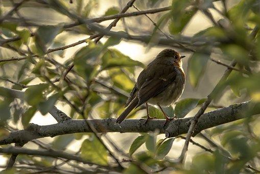 Chiffchaff, Bird, Perched, Small Bird, Perched Bird