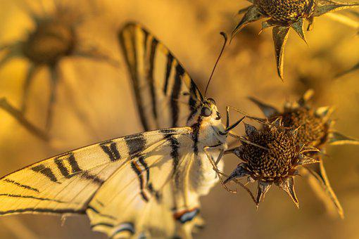 Butterfly, Butterfly Wings, Pollinate, Pollination