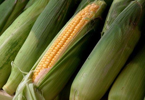 Corn, Corncob, Sweet Corn, Food, Cereals