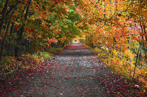 Road, Trail, Path, Forest, Trees, Leaves, Foliage, Fall