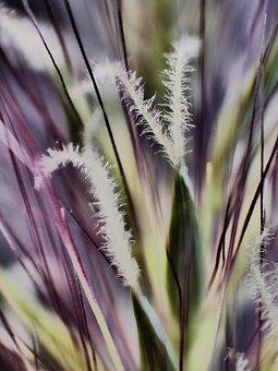 Grass Detail, Grass Blades, Grass, Macro, Green, Nature