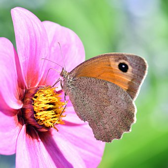 Butterfly, Flower, Insect, Petals, Wings, Bug, Antennae