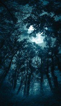Forest, Moon, Fog, Night, Halloween