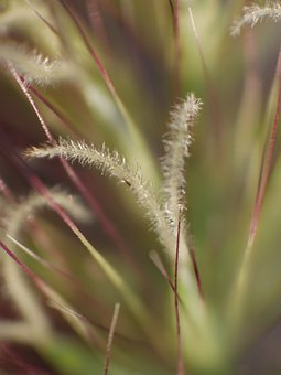 Grass Detail, Grass Blades, Grass, Macro, Green, Nature