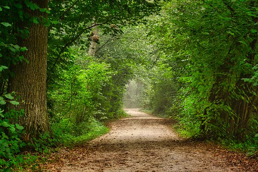 Forest, Path, Trees, Forest Path