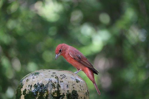 Orange Bird, Perched, Bird, Perched Bird