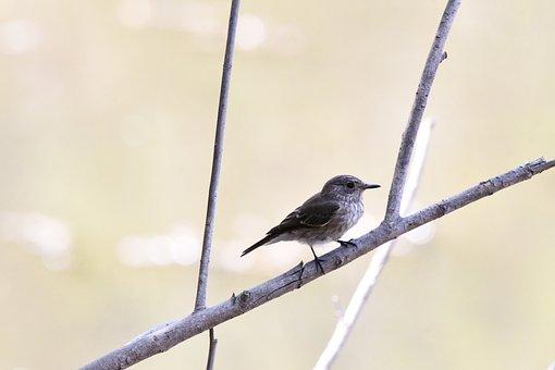Bird, Small Bird, Perched, Perched Bird, Branch