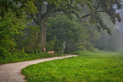 Forest, Path, Fog, Forest Path, Trees