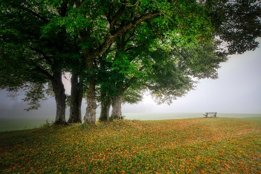 Fog, Trees, Bench, Rest, Meadow, Field, Sky, Nature