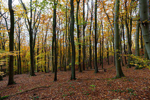 Trees, Forest, Woods, Undergrowth, Autumn Leaves