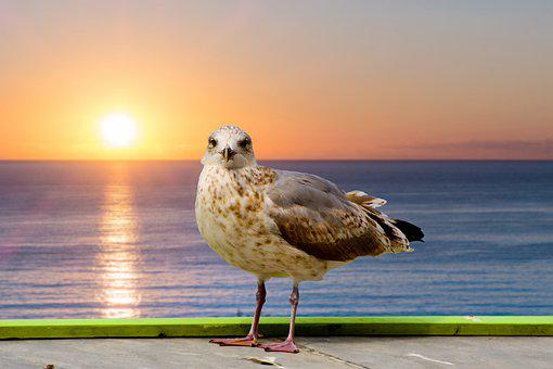 Seagull, Gull, Bird, Animal, Seabird, Avian, Wildlife